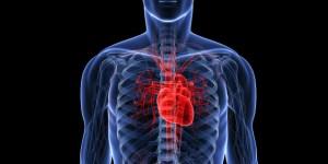 Human heart (Photo Credit: Huffington Post)