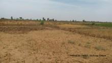 Uncultivated farmland, Argungu