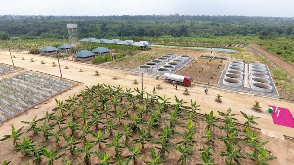 An integrated farm in Akwa Ibom, one of the numerous farms inspired the agriculture 'revolution' in the state