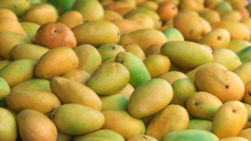 A pile of Mango fruits