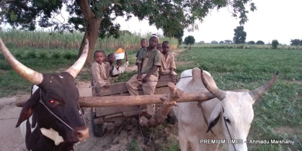 Children returning from farm using Bull Cart in Hara community.