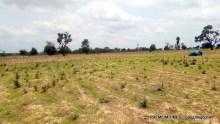 Farmers land
