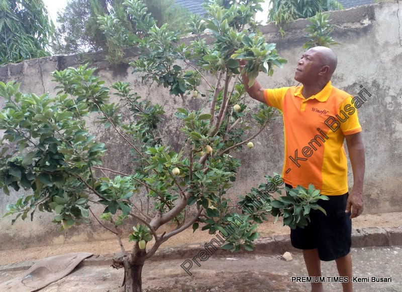 SPECIAL REPORT: How Nigerian farmers grow apples locally amidst 'harsh' weather