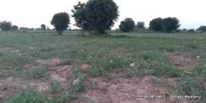 Watermelon farm in Hara community
