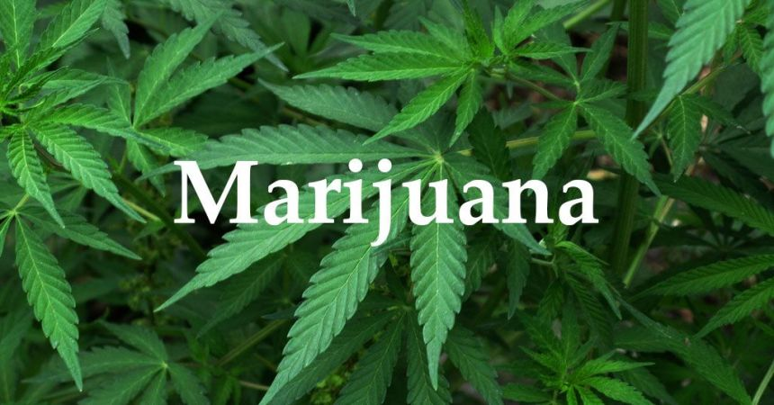 Marijuana [PHOTO CREDIT: OpenSecrets]