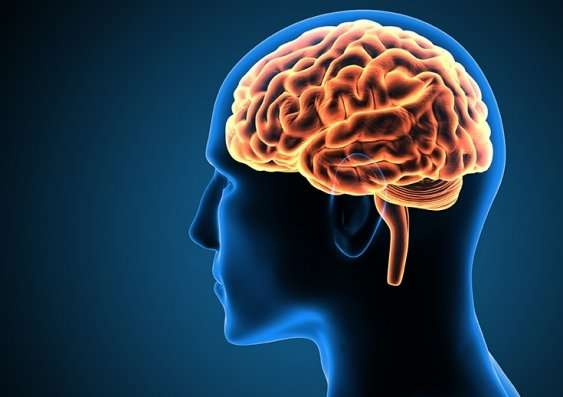 A human brain used to discuss Electroconvulsive therapy (ECT). [PHOTO CREDIT: Medical Xpress ]