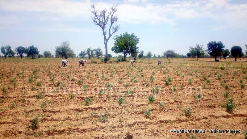 A view of the land at Gayawa kano, Jigawa state for farmers