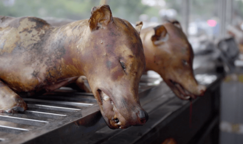 Dogs used as meat. [PHOTO CREDIT: World Dog Alliance]