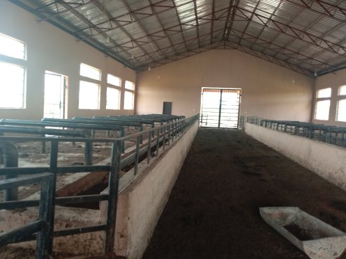 One of the barns at the Dairy Research Centre (1)