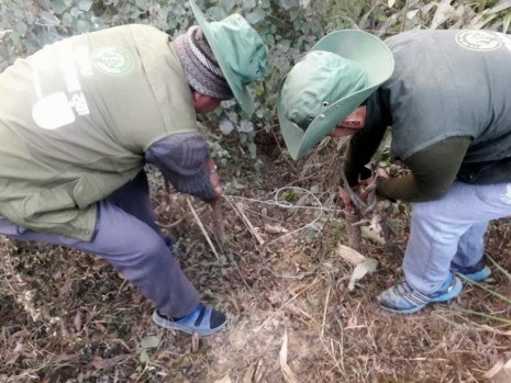 Members of a community-based anti-poaching unit removing animal snares in Kavre district, Nepal. Nepal has not recorded any major busts so far, but wildlife law enforcement experts say that pangolins have become the most poached wildlife in the country in recent years. © Zoological Society of London / Himalayan Nature
