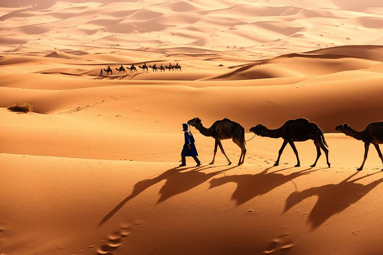 The Sahara Desert [Photo: ThoughtsCo]