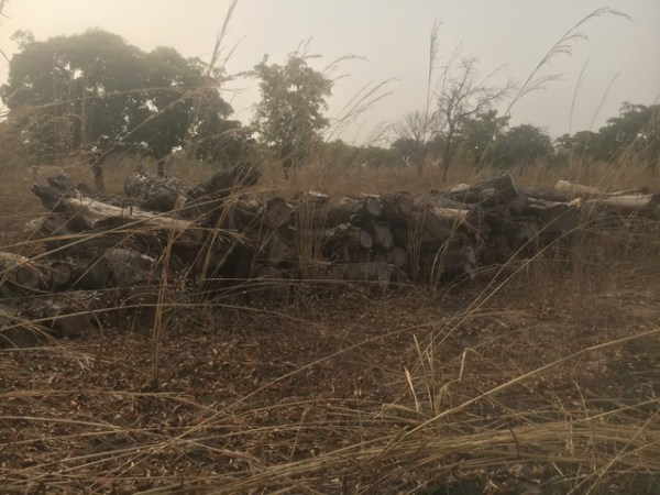 Ghana Abandoned rosewood