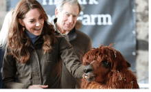 Britain's Catherine, Duchess of Cambridge, looks at an alpaca as she visits the Ark Open Farm in Newtownards, Northern Ireland February 12, 2020. Chris Jackson/Pool via REUTERS