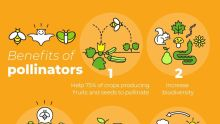 Infograph showing benefits of pollinators. [CREDIT: Official Twitter handle of Food and Agriculture Organisation of the United Nations]