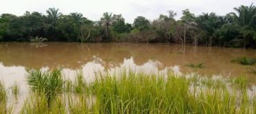 Farmlands destroyed by the flood.