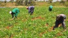 farmers [photocredit: Businessday.ng]