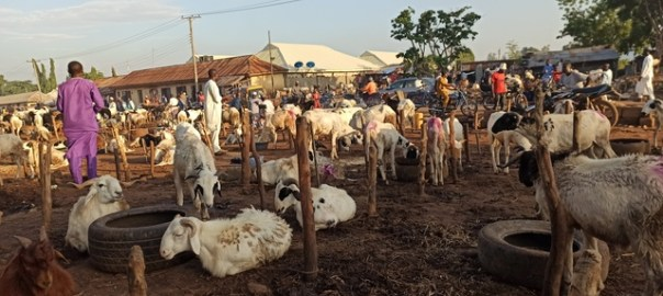How pandemic affected ram sales in Kaduna