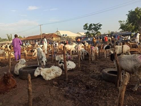 How pandemic affected ram sales in Kaduna