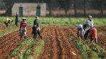 Farmers on farm [PHOTO CREDIT: Voice of Nigeria]