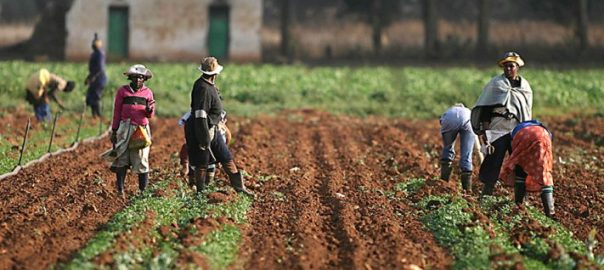 Farmers on farm [PHOTO CREDIT: Voice of Nigeria]