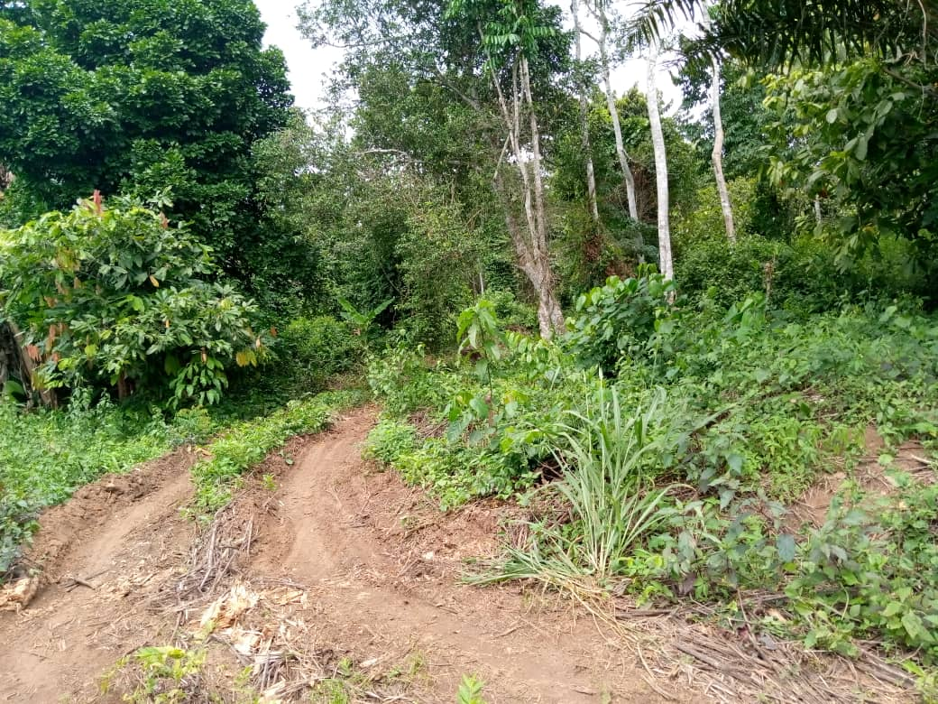 The road to Shasha forest