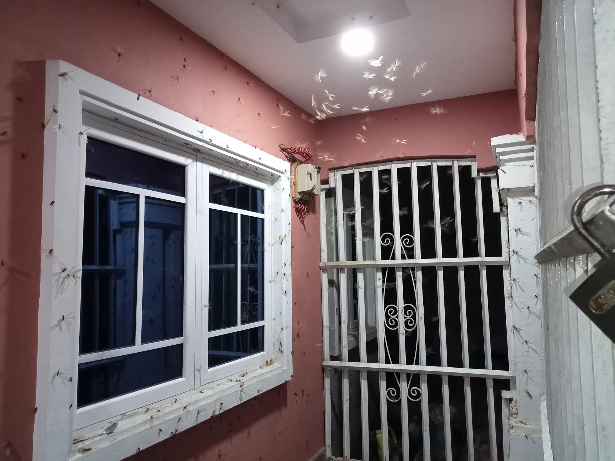 Swarm of winged termites at Mr Ab Udofia's compound in Uyo Photo_Ab Udofia