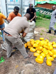 Displayed Cannabis sativa intercepted by Customs along Seme Badagry expressway on Tuesday.