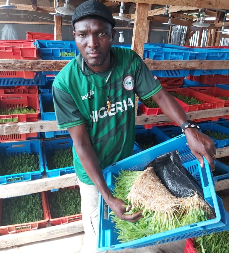 Mr Retson Tedekhe, holding a basket of maize planted in an Hydroponic set up.