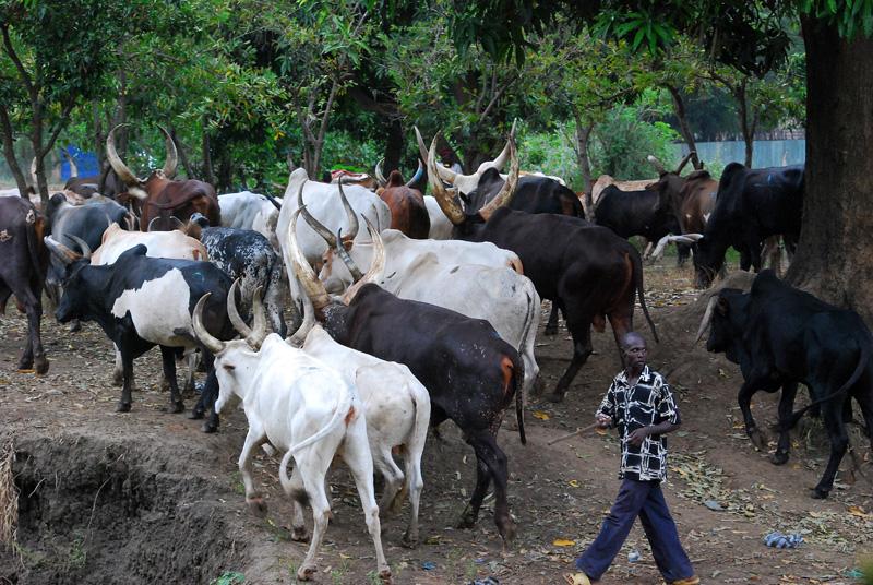 Cattle Herdsmen