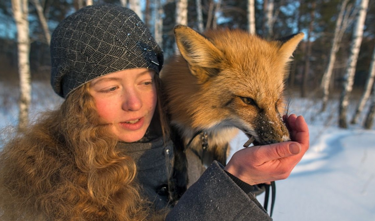Is This Russian Fox Wild Domesticated Or Something In