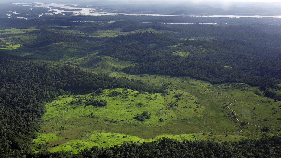 Treehugger / alexandra cristina nakamura trees are absolutely vital to life here on earth, but they are also being destroyed at an alar. Brazil S Amazon Deforestation Rose By Almost A Third Last Year The World From Prx