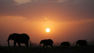 Image result for elephants at night