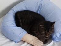 Boyfriend Arm Pillow | Boyfriend Pillow