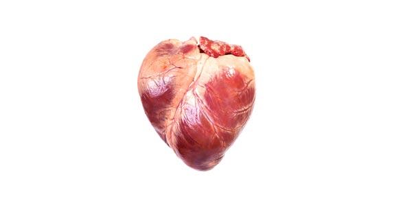 eye labeling diagram quiz taiga food web label the human heart proprofs