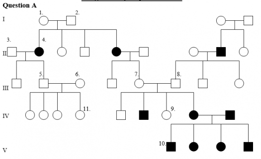 In the above pedigree, the affected individuals are shown