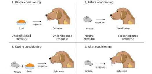Classical Conditioning And Operant Conditioning  ProProfs