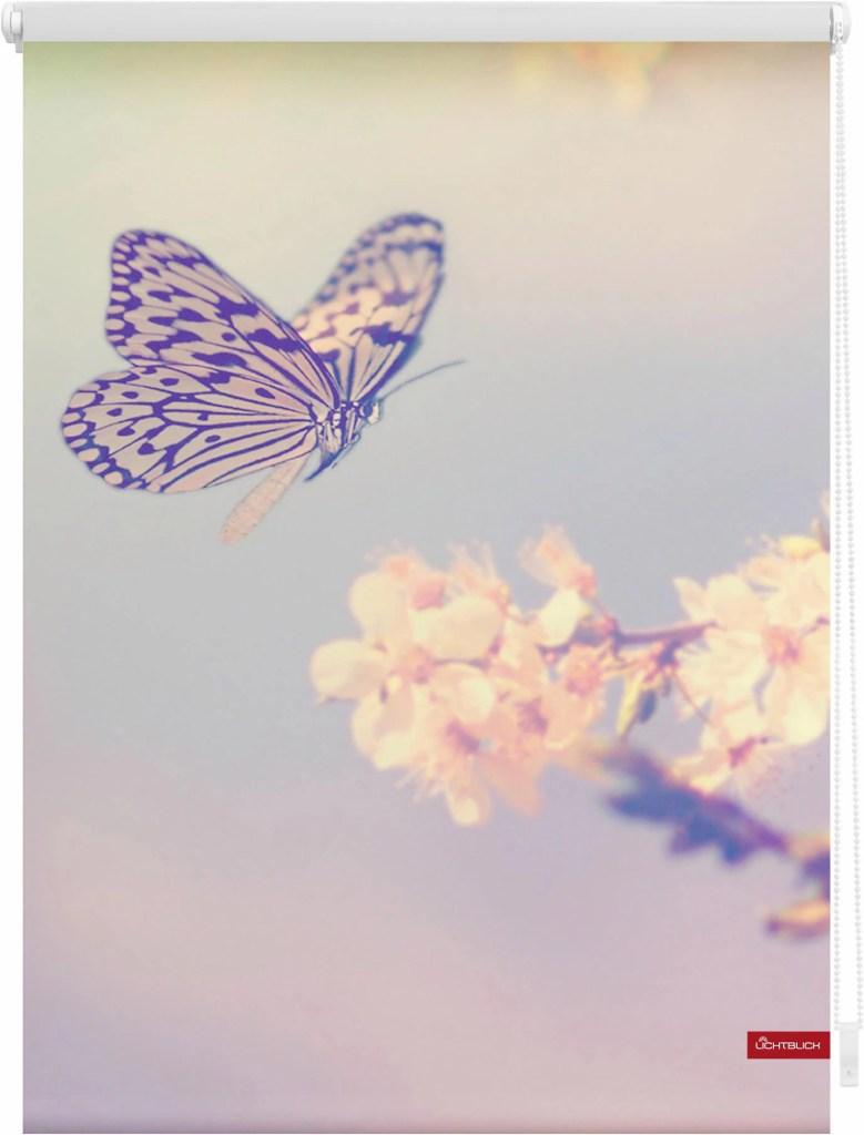 Seitenzugrollo »Klemmfix Motiv Schmetterling«, LICHTBLICK, Lichtschutz, ohne Bohren, freihängend