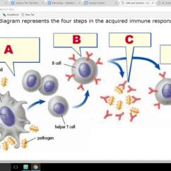 Immune System Diagram Blue Whale Life Cycle Sc8w 3 1 Quiz Quizizz