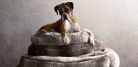 Luxe Faux Fur Pet Beds | Restoration Hardware