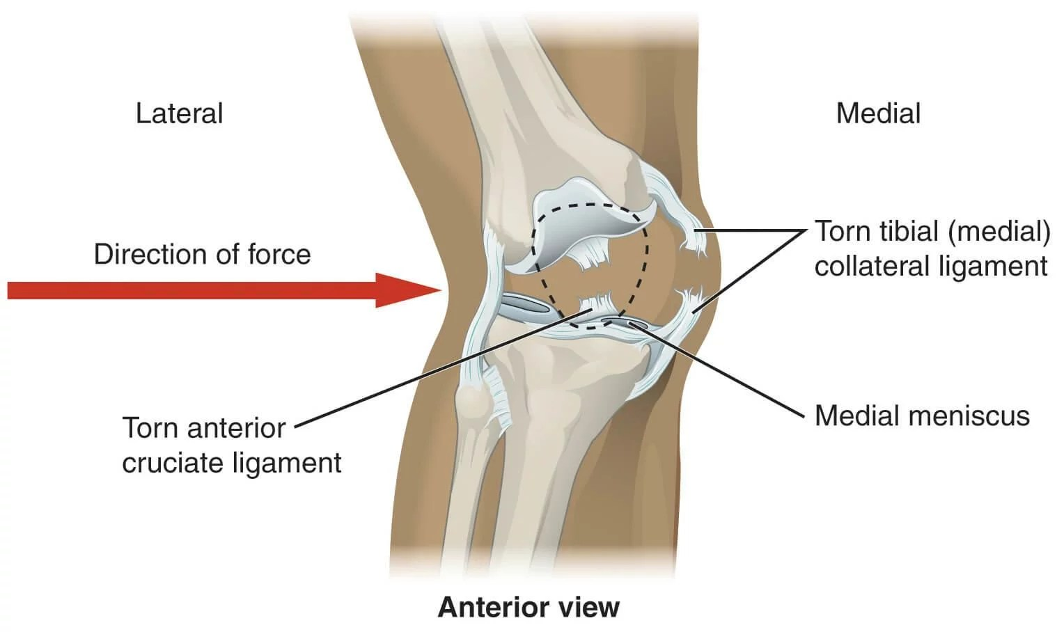 hight resolution of knee part diagram