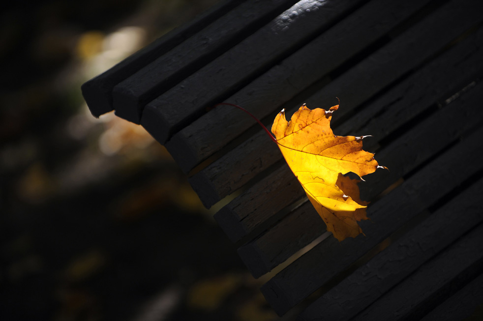 fall_color_10.jpg