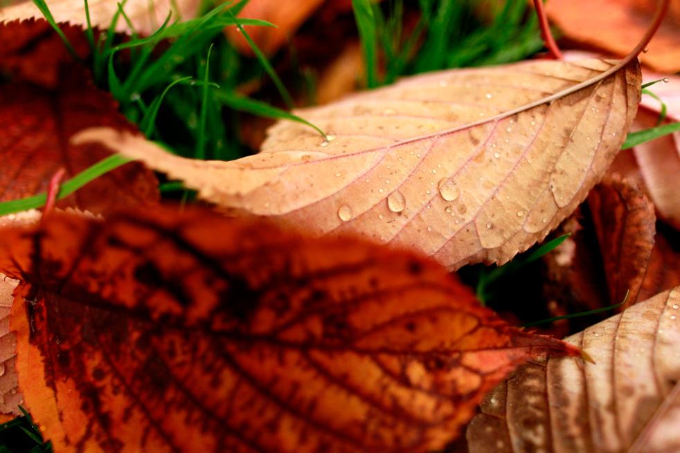 fall_color_15.jpg