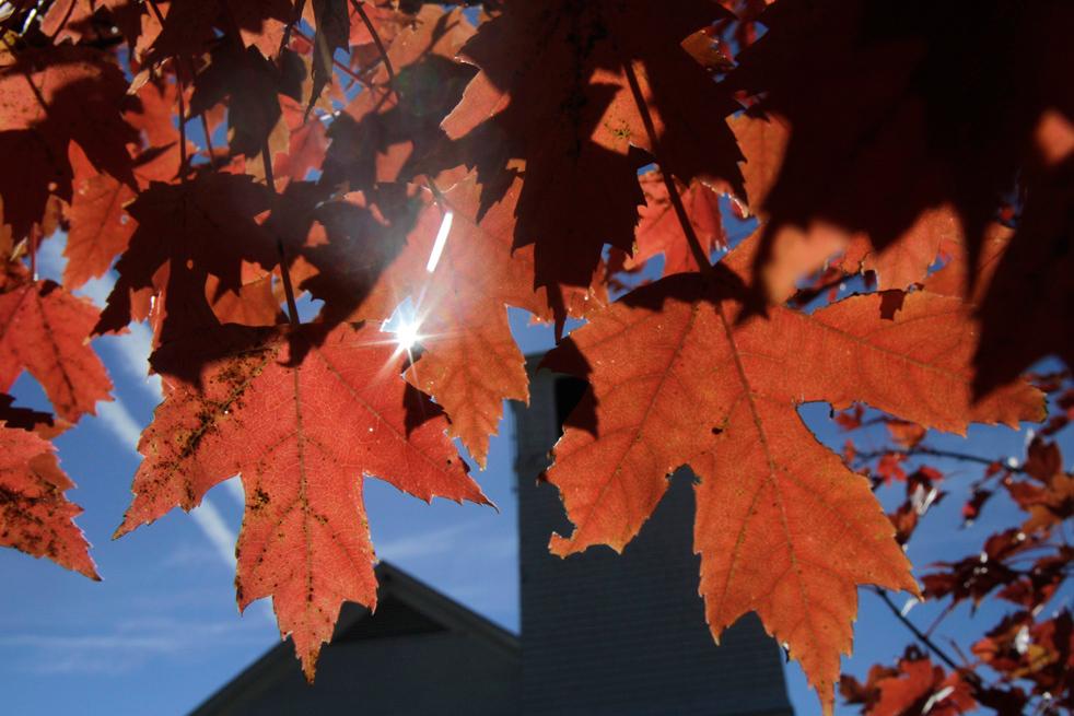 fall_color_36.jpg