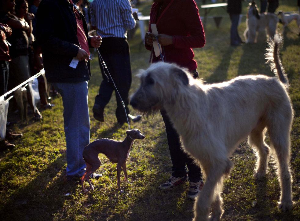 cuba_dog_show_11.jpg