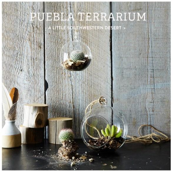terrarium1