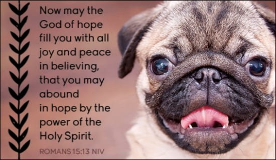 Sympathy Wallpaper Quotes Free Romans 15 13 Ecard Email Free Personalized Animals