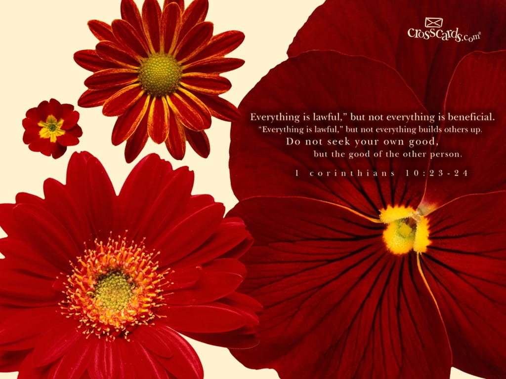 Free Computer Wallpaper Backgrounds For Fall 1 Corinthians 10 23 24 Bible Verses And Scripture