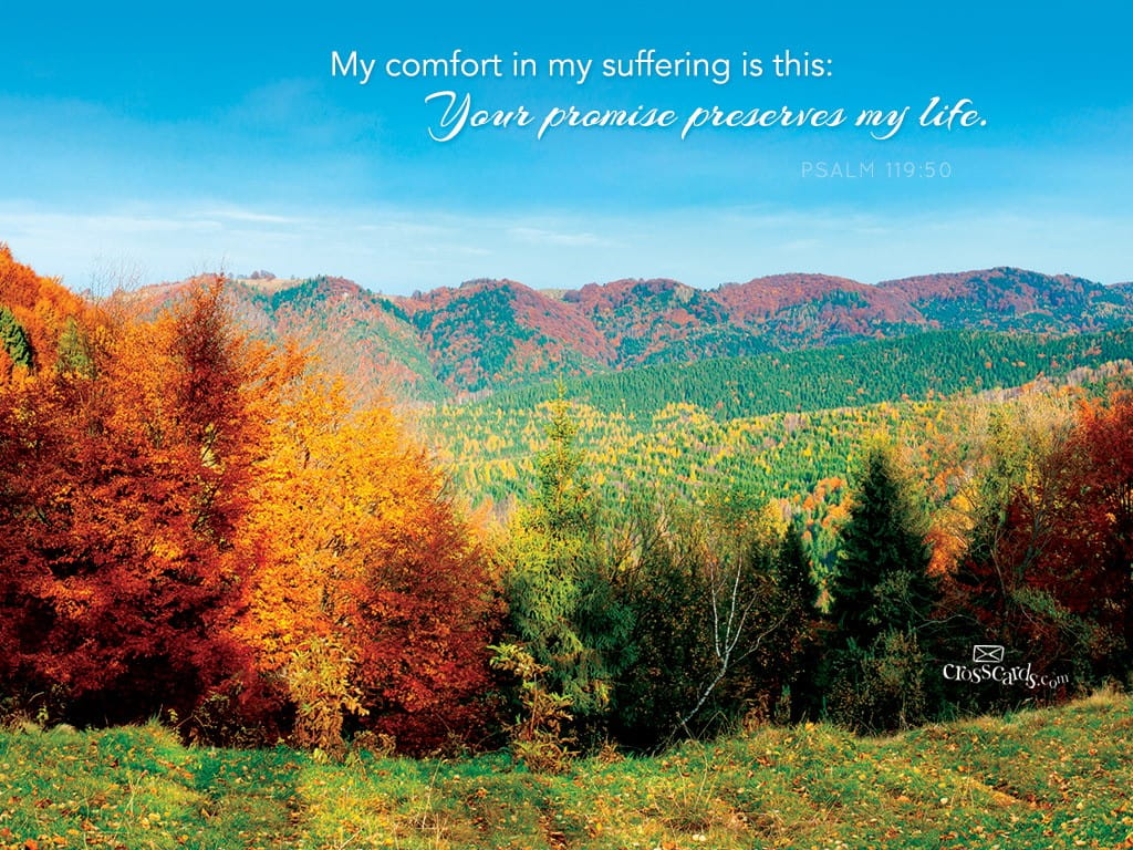 Fall Scripture Iphone Wallpaper Psalm 119 50 Bible Verses And Scripture Wallpaper For