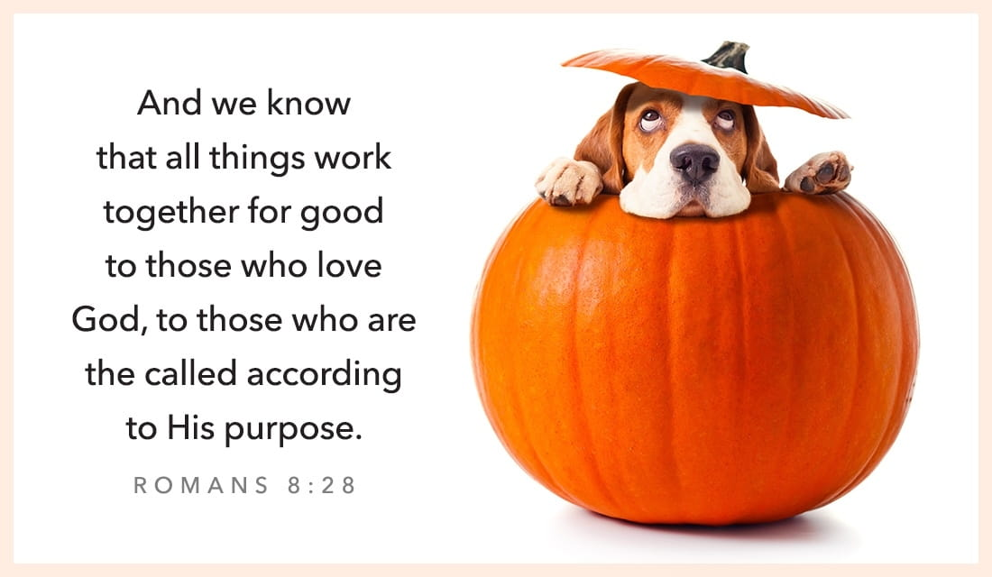Fall Owl Wallpaper Free Romans 8 28 Ecard Email Free Personalized Scripture