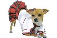 Slutty Halloween costumes  for dogs?   Salon.com